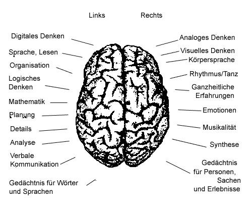 Sprachzentrum Gehirnhälfte